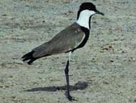 Birdwatching sur le Lac TOHO