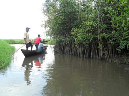 Valorisation des oiseaux de la mangrove de la lagune cotière et dans la vallée du fleuve Niger