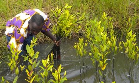 plantation_paletuviers-3.jpg