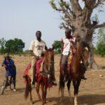 chevaux_wassangari.jpg