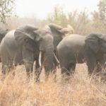 elephant_Alfakoara.jpg