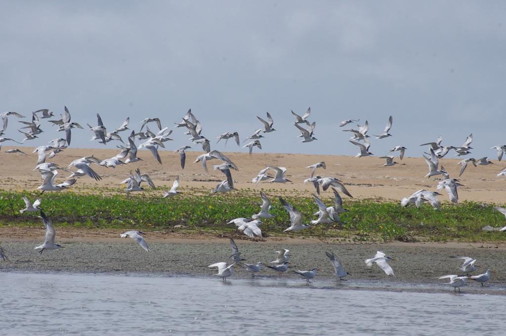 Promotion de l'écotourisme pour la gestion intégrée transfrontalière du fleuve Mono
