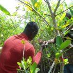 mesures_dans_les_mangroves_a_Adounko.jpg