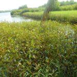 pepiniere_de_mangrove.jpg