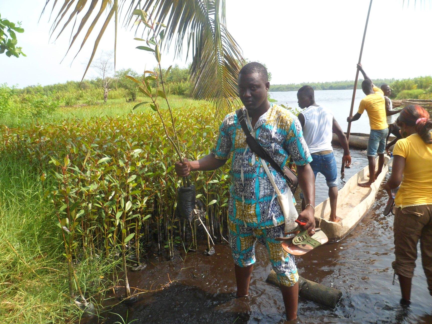 Plantation de la mangrove dans la région de la lagune côtière et du lac Ahémé