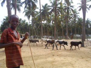 Aventure Peulh au Bénin