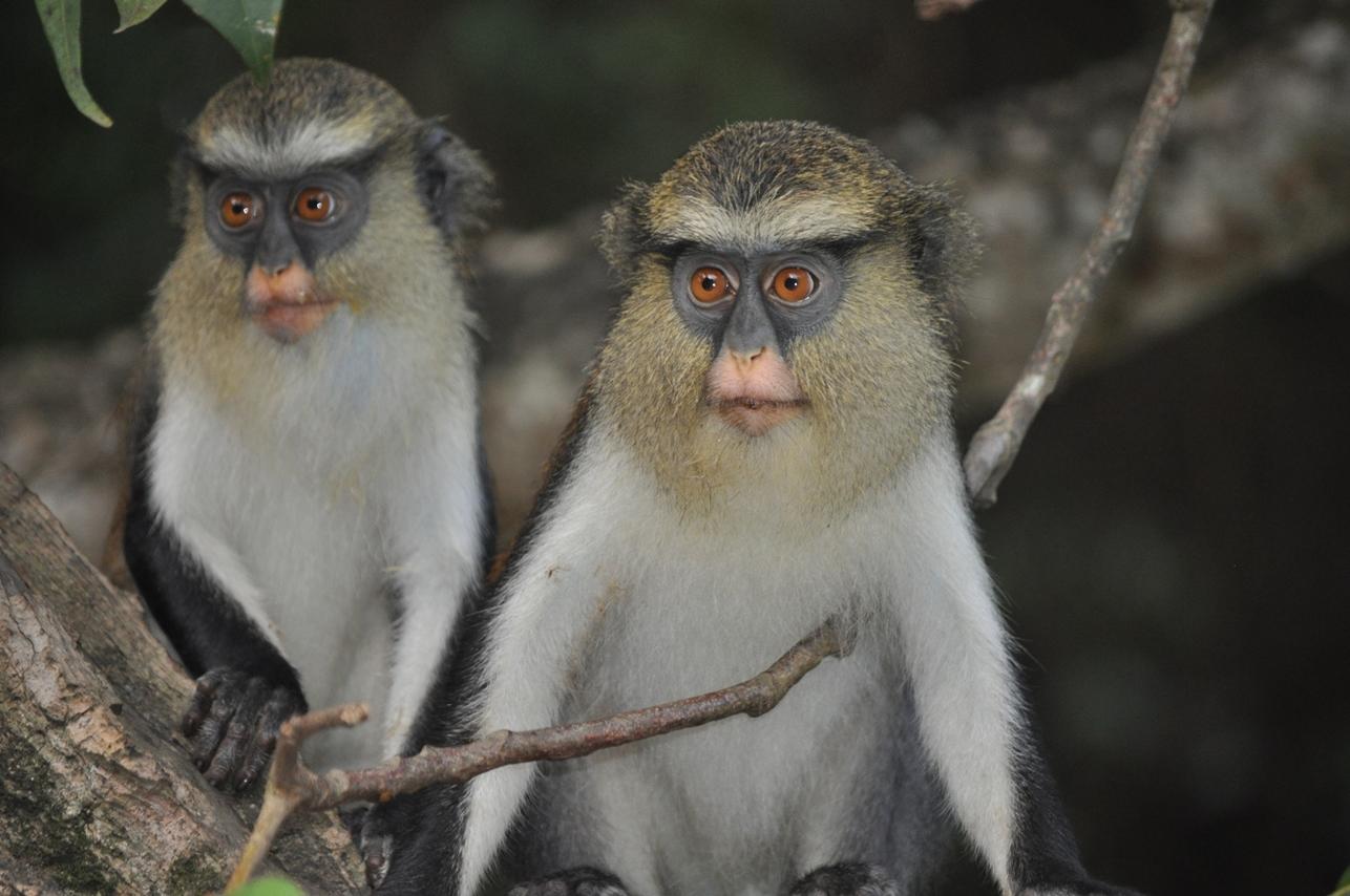 convention locale de gestion durable de la forêt sacrée de mona Kpétou