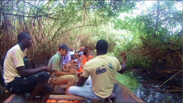 mangrove_adounko.jpg