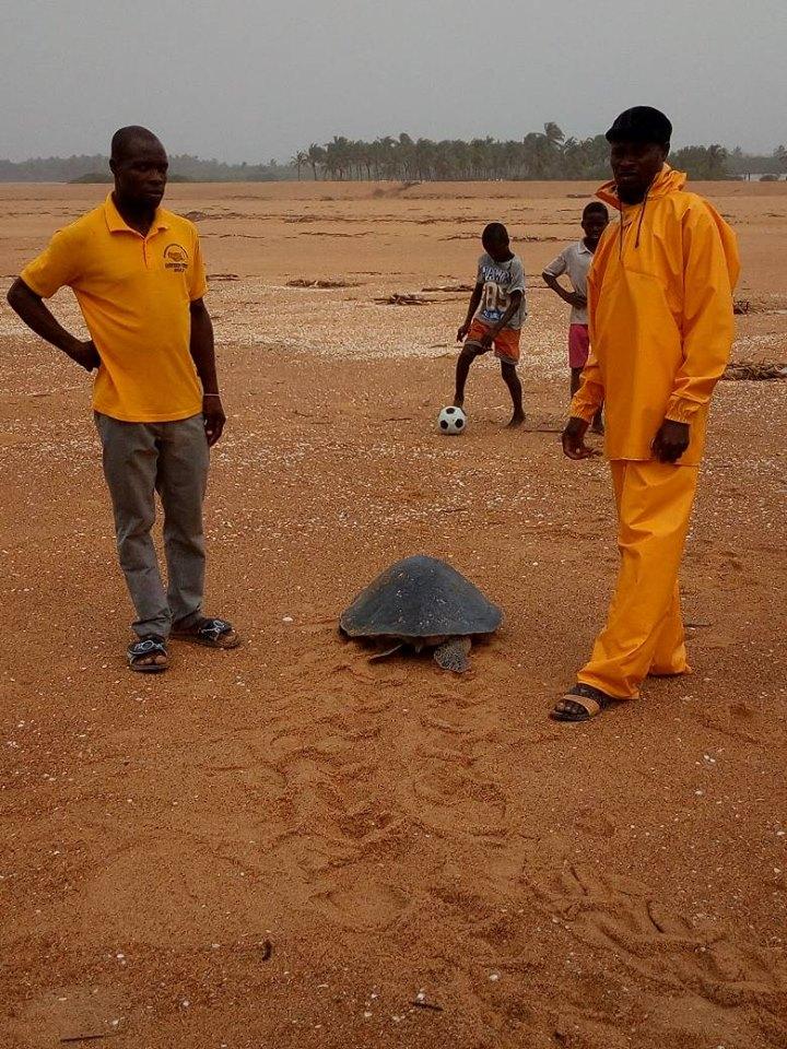 Activités des écloseries des tortues marines dans la Réserve la Bouche du Roy
