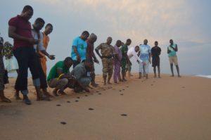 Près de 120 tortues bébés libérées à Hakouè, dans la commune de Grand-Popo.