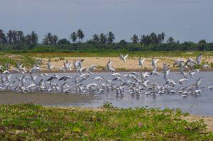 Développement d'un réseau connecté d'écotourisme communautaire au Bénin