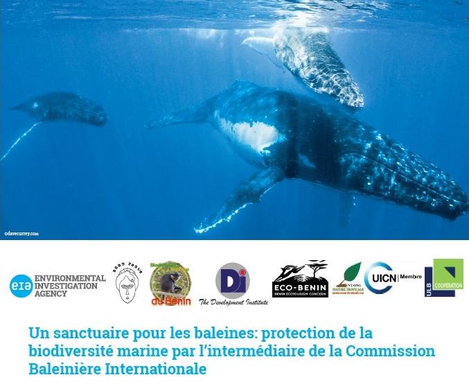 Plaidoyer sanctuaire pour les baleines