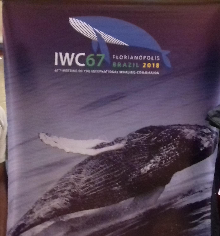 67ieme Réunion de la Commission Baleinière Internationale au Bresil : Le Bénin vote contre la création d'un sanctuaire dans l'Atlantique pour les baleines