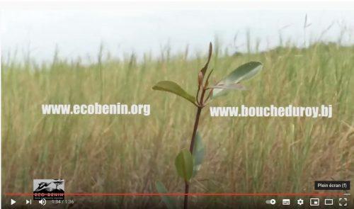 Benin : Bilan restauration des écosystèmes mangrove dans la Bouche du Roy – ONG Eco-Benin
