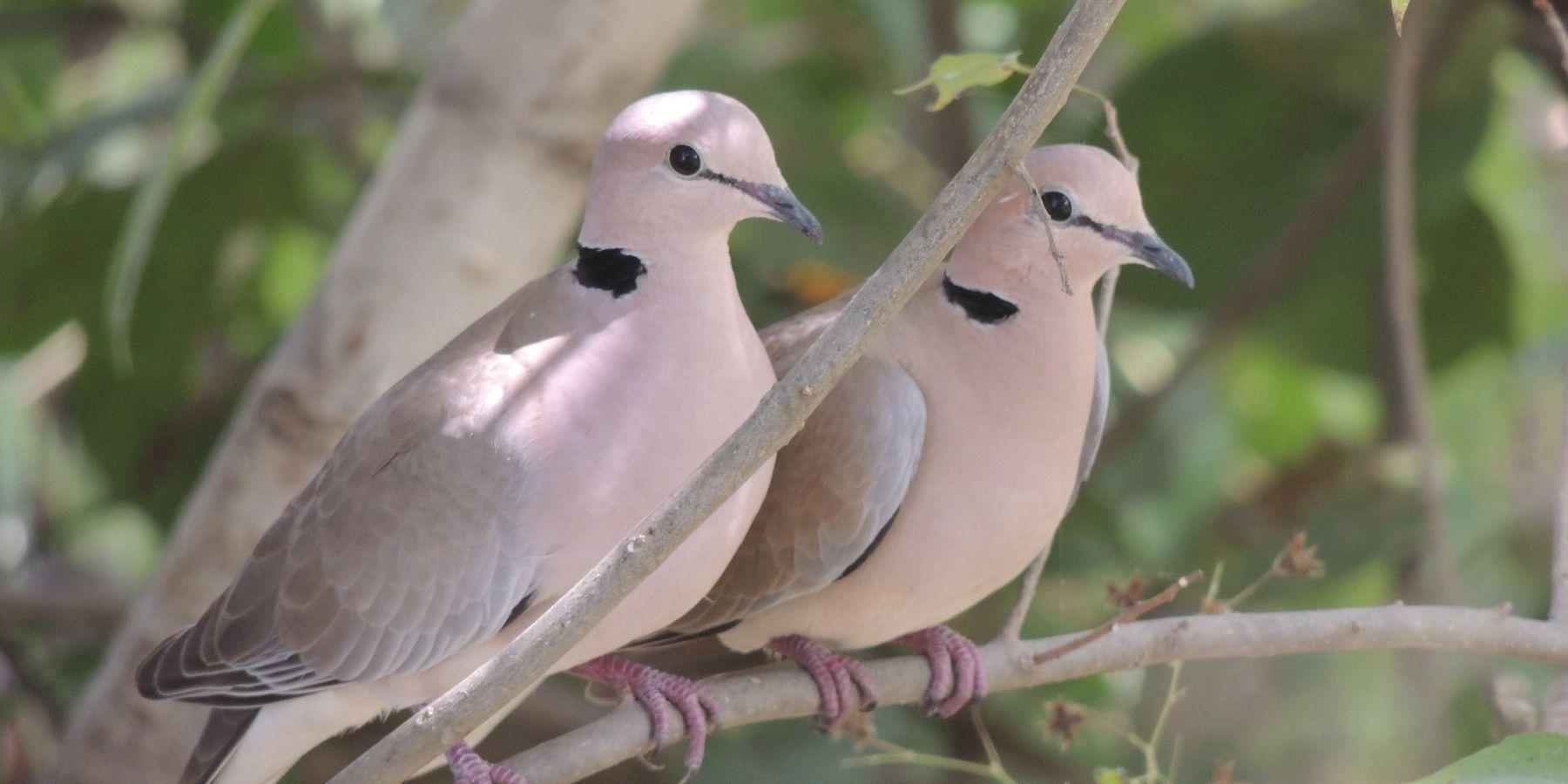 Rendez-vous avec les oiseaux du Bénin