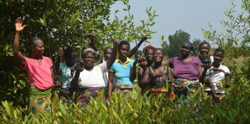 Vaste campagne de restauration des zones de mangroves dans la Bouche du Roy