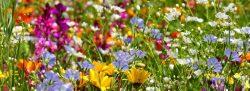 Le projet BIODEV2030 pour intégrer la biodiversité au développement – Communiqué de presse