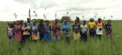 Restauration de mangroves, des entreprises responsables s'engagent pour 100 hectares.